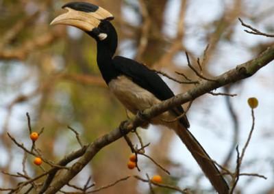 Bird Watching In Dandeli