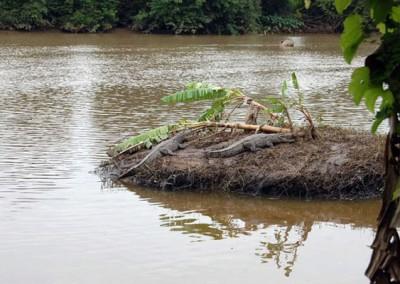 Crocodile Park Dandeli